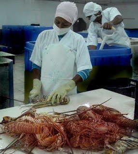 Industria pesquera de Caibarién evita descarga de residuales al mar
